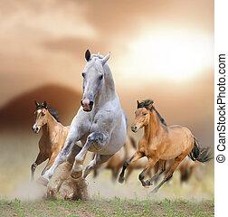 konie, zachód słońca