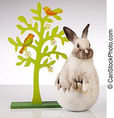 konijn, op wit