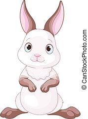 konijntje, schattig
