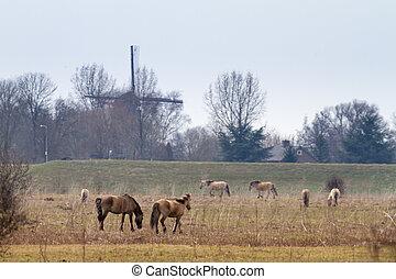 konik, mit, windmühle