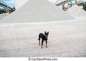 konkret, hund, fabrik
