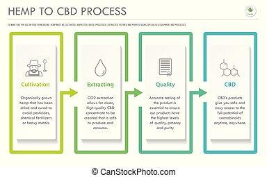 konopie, cbd, infographic, poziomy, handlowy, proces