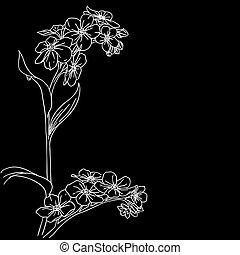 konserwator, gałązka, kwitnąc, orchidee
