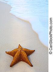 konst, sjöstjärna, på, a, strand sandpappra, med, våg