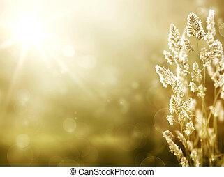konst, sommar, bakgrund., soluppgång, på, den, äng