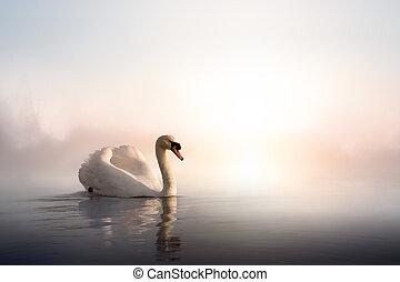 konst, svan, flytande, på, den, vatten, hos, soluppgång, av,...
