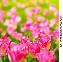 konst, vår blommar, bakgrund