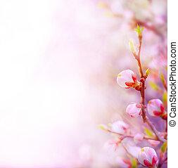 konst, vacker, fjäder, blomstrande, träd, på, sky, bakgrund