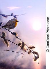 konst, vacker, fjäder, morgon, natur, bakgrund