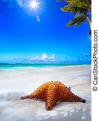 konst, vacker, hav, strand, på, a, karibisk, ö