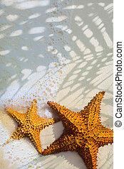 konst, vacker, sjöstjärna, på, a, strand sandpappra, med, våg