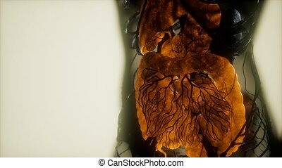 kontrast, organy, ciało, ludzki, mri