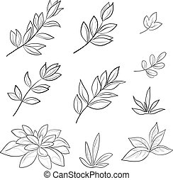 kontury, liście