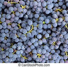 konzervativní, zrnko vína, grafické pozadí