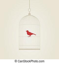 kooi, birdie