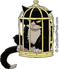 kooivogel, kat