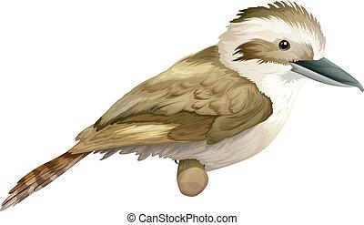 Illustration of a laughing kookaburra - Dacelo (genus)