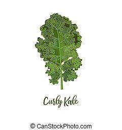 kool, zomer, blad, krullend, kale., lente, concept., gezonde , sappig, op, rauwe, vers voedsel, dieet, afsluiten, voedingsmiddelen, vegetariër, isolated.