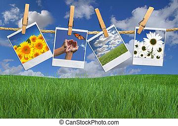 koord, beelden, bloem, polaroid, hangend