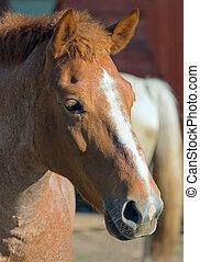 kopf, a, pferd
