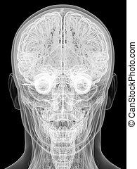 kopf, freigestellt, schwarz, menschliche , röntgenaufnahme, ansicht