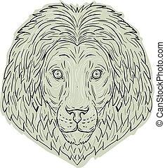 kopf, große katze, löwe, mähne, zeichnung