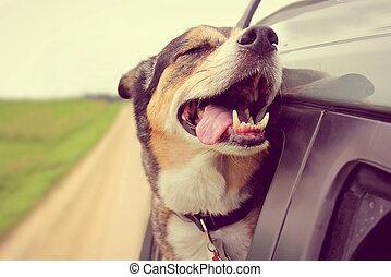 kopf, hund, heraus, stecken, fenster, glücklich, auto