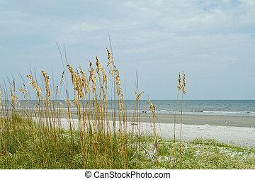 kopf, sandstrand, hilton, zugewandt, düne, gras, sand, ...