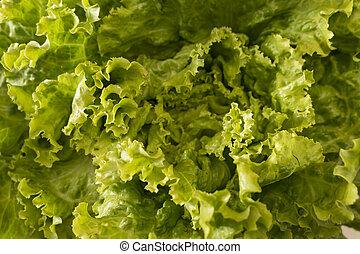 kopfsalat, abstrakt, salat, fragment., hintergrund.