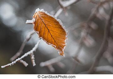 kopyto příkaz větvení, list, les, zima, zamrzlý, jeden