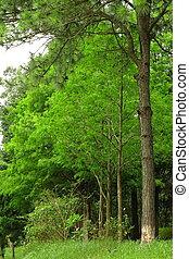 kopyto ukrýt v lese