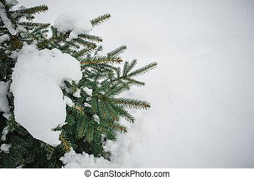 kopyto zima, sněžit