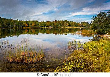korán, ősz, gondolkodások, és, fű, alatt, toddy, tavacska,...