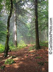 korán, erdő, reggel