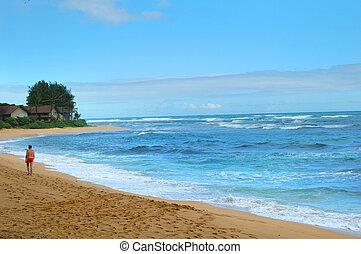 korán, jár, tengerpart, kauai, reggel