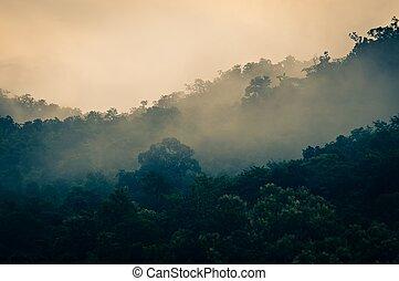 korán, ködös erdő, reggel