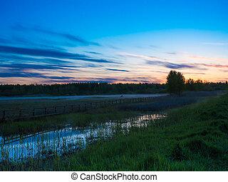 Kor, dimmig,  över, solnedgång, fält