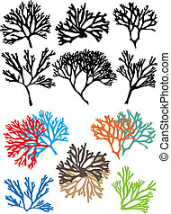 koraal, vector, set, rifen