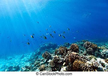 koraalrif, onderwater