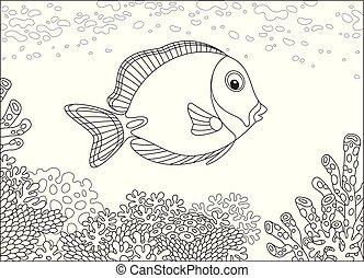 koral, fish, chirurg, rafa