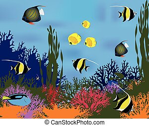 koral, fish