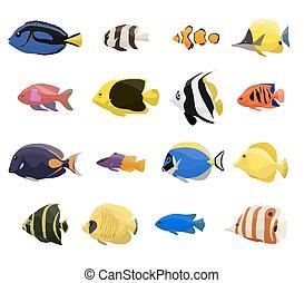koral, komplet, fish, rafa