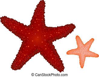 koral, rozgwiazdy, czerwony