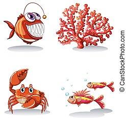 koral, zwierzęta, morze, rafa