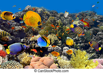 korall, és, fish