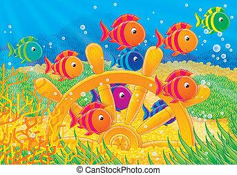 korall, fiskar