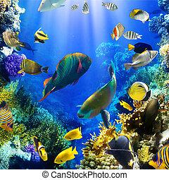 korall, koloni, och, korall, fish