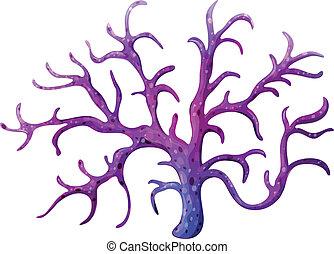 korall, stemy, rev