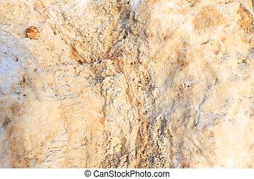 koralle, gestein, hintergrund, textured