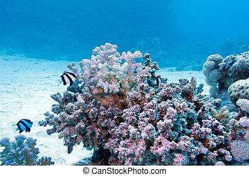 exotische blauer hintergrund boden koralle hart wasser wei beschattet tropische. Black Bedroom Furniture Sets. Home Design Ideas